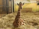 в зоопарке Калининграда